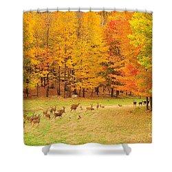 White Tail Deer Herd Shower Curtain by Terri Gostola