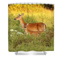 White-tail Doe And Fawn In Meadow Shower Curtain