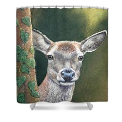 White Tail Doe At Ancon Hill Shower Curtain by Ceci Watson