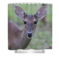 White Tail Young Buck Closeup Shower Curtain by Dodie Ulery