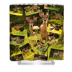 Shower Curtain featuring the photograph White-tailed Collage by Angel Cher