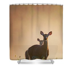 White Tailed Deer 2016 Shower Curtain