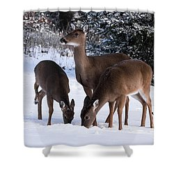White-tailed Deer - 8855 Shower Curtain