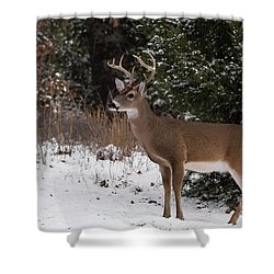 White-tailed Deer - 8904 Shower Curtain