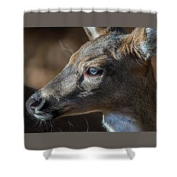 White Tailed Deer Facial Profile Closeup Portrait Shower Curtain