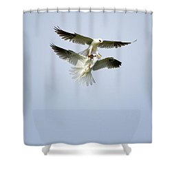 White-tailed Kites Food Exchange Shower Curtain