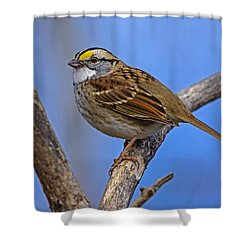 White Throat Shower Curtain