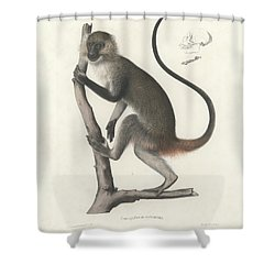 White Throated Guenon, Cercopithecus Albogularis Erythrarchus Shower Curtain