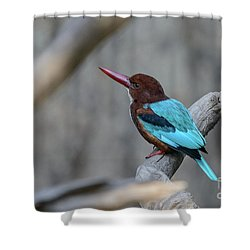 White-throated Kingfisher 02 Shower Curtain