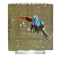 White-throated Kingfisher Shower Curtain