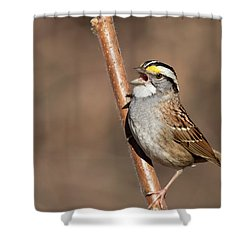 Shower Curtain featuring the photograph White-throated Sparrow by Mircea Costina Photography