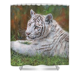 Shower Curtain featuring the painting White Tiger Cub 2 by David Stribbling