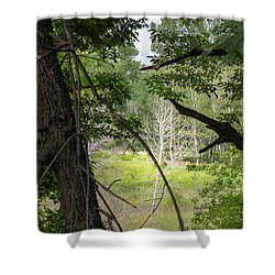White Tree In Magic Forest Shower Curtain