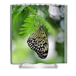 White Tree Nymph Butterfly 2 Shower Curtain by Marie Hicks