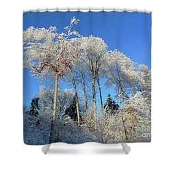 White Trees Clear Skies Shower Curtain