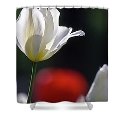 White Tulips  Blossom Shower Curtain by Heiko Koehrer-Wagner