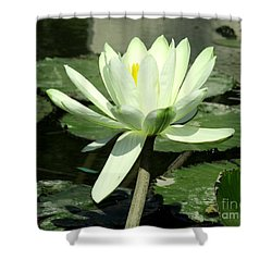 Shower Curtain featuring the photograph White Water Lily 1 by Randall Weidner