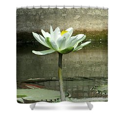 Shower Curtain featuring the photograph White Water Lily 2 by Randall Weidner