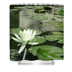 Shower Curtain featuring the photograph White Water Lily 3 by Randall Weidner