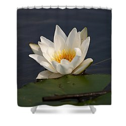 Shower Curtain featuring the photograph White Waterlily 1 by Jouko Lehto