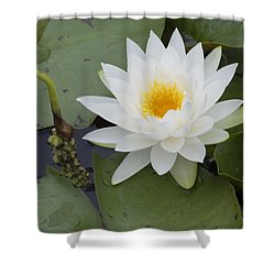 White Waterlily Shower Curtain by Linda Geiger