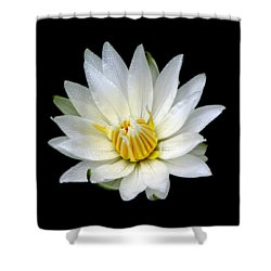 Shower Curtain featuring the photograph White Waterlily With Dewdrops by Rose Santuci-Sofranko