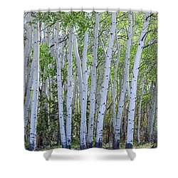 White Wilderness Shower Curtain by James BO Insogna