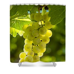 White Wine Grapes Lit By The Sun Shower Curtain by Teri Virbickis