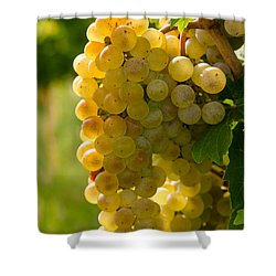 White Wine Grapes Shower Curtain by Teri Virbickis