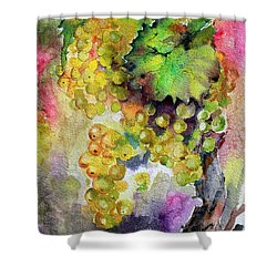 White Wine Grapes Vineyard Watercolor Painting Shower Curtain by Ginette Callaway