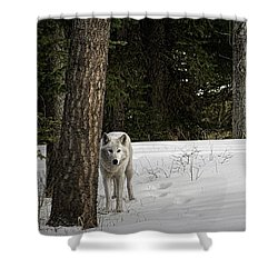 White Wolf Shower Curtain by Brad Allen Fine Art