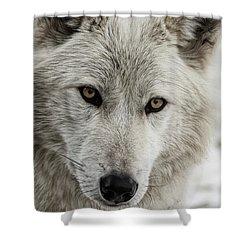 White Wolf II Shower Curtain