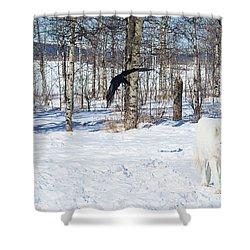 White Wolfdog Shower Curtain