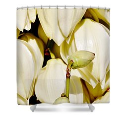 white Yucca flowers Shower Curtain by Werner Lehmann