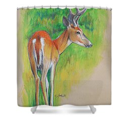 Whitetail Buck Mixed Media Shower Curtain