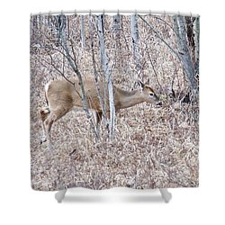 Shower Curtain featuring the photograph Whitetail Deer 1171 by Michael Peychich