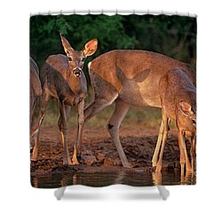 Shower Curtain featuring the photograph Whitetail Deer At Waterhole Texas by Dave Welling