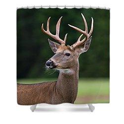 Whitetail Deer Buck Shower Curtain
