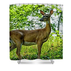 Shower Curtain featuring the photograph Whitetail Deer  by Thomas R Fletcher
