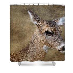 Whitetail Doe Portrait Shower Curtain