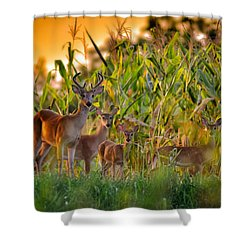 Whitetail Family Shower Curtain