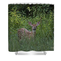 Whitetail Fawn 20120711_37a Shower Curtain