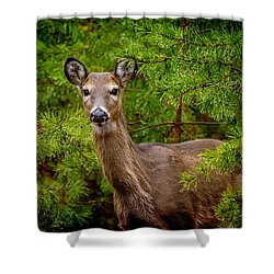 Whitetail In The Pines Shower Curtain