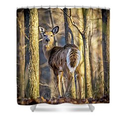 Whitetail Winter Morning Shower Curtain