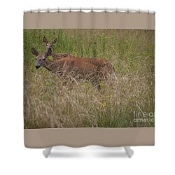 Whitetail With Fawn 20120707_09a Shower Curtain