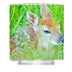 Shower Curtain featuring the photograph Whitetailed Deer Fawn by A Gurmankin