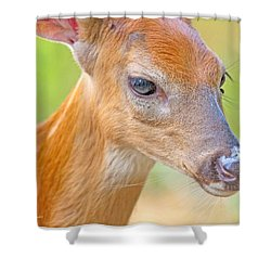 Shower Curtain featuring the photograph Whitetailed Deer Fawn Portrait by A Gurmankin