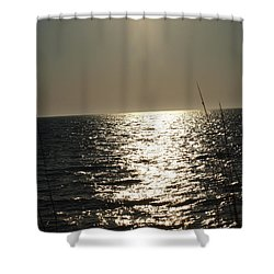 Shower Curtain featuring the photograph Who Framed Roger Rabbit by Robert Margetts