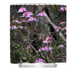Shower Curtain featuring the photograph Who Put The Wild In Wildflowers by Skip Willits