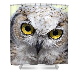 Whooo Shower Curtain